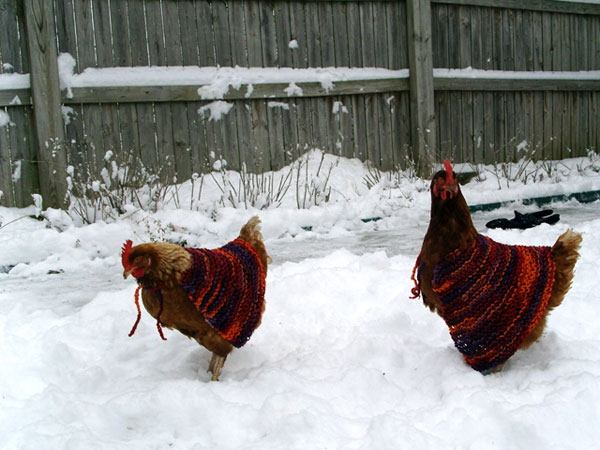 Chickens in sweaters