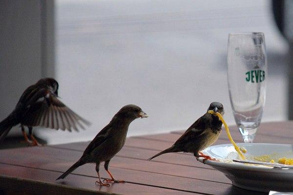birds dining
